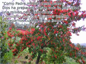 frases de Marta-flores 12