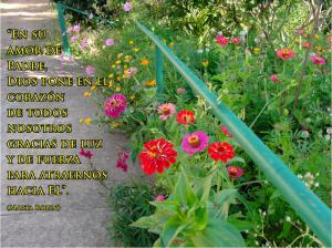 frases de Marta-flores 2